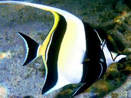 Most Beautiful Colors by Top Ten Most Beautiful And Colorful Fish All Aquarium Info