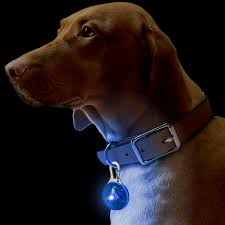dog puppy pet collar pendant led safety clip on night light flashing