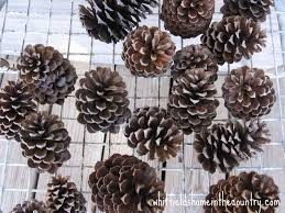 white pine cone whitfield u0027s home in the country diy pine cone ornaments