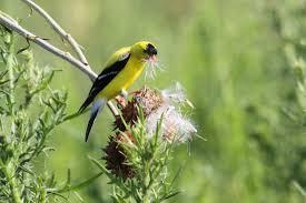 identifying birds birds in the yard