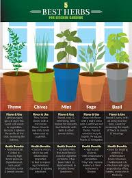 kitchen herb garden ideas small kitchen herb garden design it together
