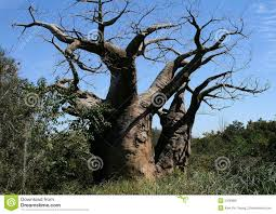 tree stock photo image of branches roots 5106980