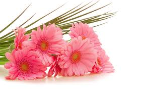 Love Flowers Flowers And Its Significance In Love Flowers For Your Love My