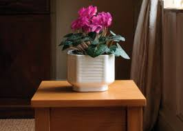 Beautiful Indoor Plants Cyclamen Indoor Plant In The Small White Pot Beautiful Flowering
