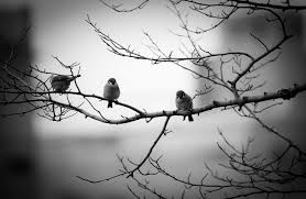 file birds on a tree 2014 02 08 12 17 jpg wikimedia commons