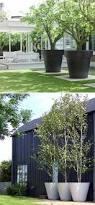 Tree Ideas For Backyard 25 Unique Large Outdoor Planters Ideas On Pinterest Garden