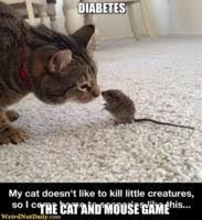Diabetes Cat Meme - cat mouse bffs meme generator captionator caption generator frabz