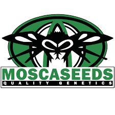 bulk cannabis seeds buy a big bag of marijuana seeds online