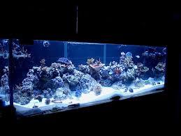 coralline algae as a nuisance or aquarium decor aquanerd