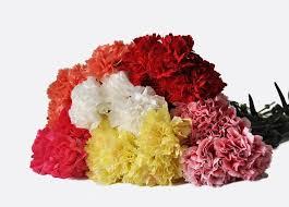 carnations in bulk assorted carnations fresh online flowers wholesale flowers