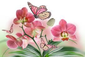 butterfly flowers flowers butterflies butterfly soft bokeh j wallpaper at 3d