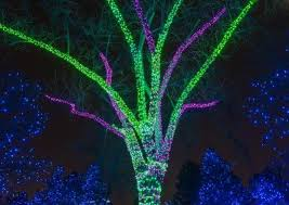 denver zoo lights hours 31 best denver zoo images on pinterest denver zoo the zoo and zoos