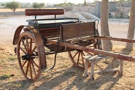 carrozze d epoca il cavallo murgese e le carrozze d epoca