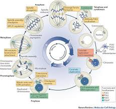burgess lauren unit 5 dna and cell cycle