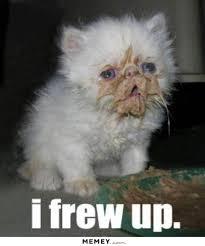 Funny Kitten Meme - kitten memes funny kitten pictures memey com