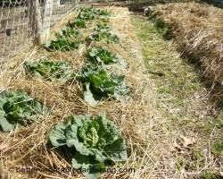 best 25 straw mulch ideas on pinterest bales of straw