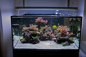 Saltwater Aquascaping Aquascaping For 900mm Cube Marine Aquariums South Africa