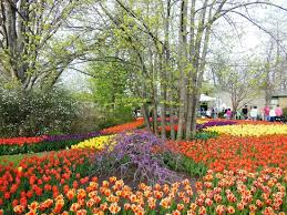 Botanical Garden Cincinnati Blooms Tunes Event In April Picture Of Cincinnati Zoo