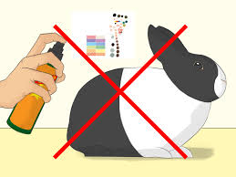 15 Ways To Clean With by 3 Easy Ways To Bathe Your Pet Rabbit Wikihow