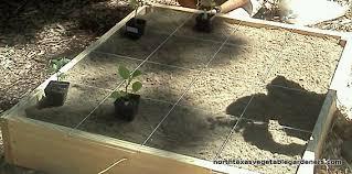 vegetable gardening 101 north texas vegetable gardeners blog