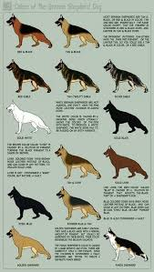 australian shepherd training tips german shepherd coat color dog training tips pet care