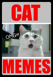 Omg Cat Meme - memes omg cat memes funny memes cat jokes dank memes bonus