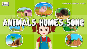 types of animal homes pictures home pictures