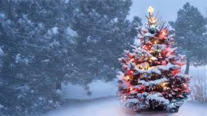 cristmas tree brexit could boost christmas tree industry growers say news