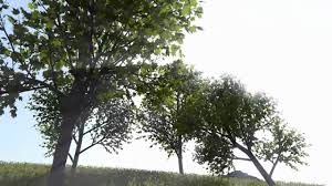 real time rendering and animation of trees youtube