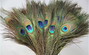 Peacock Decorations For Home Accessories Drop Dead Gorgeous Image Of Accessories For Home