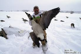 Homemade Goose Blind Big Goose
