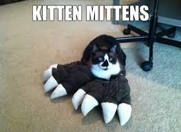 Funny Kitten Memes - funny kitten memes 11