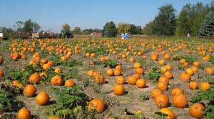 a spooky tale in time for halloween weather cuts into pumpkin