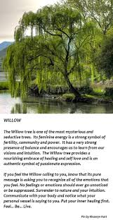 best 25 willow tree ideas on weeping willow trees