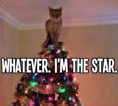 Cute Christmas Meme - christmas cat meme 28 images welcome to memespp com it s lj