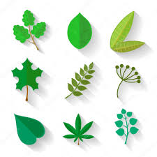 set of leaves various trees isolated green leave on a white