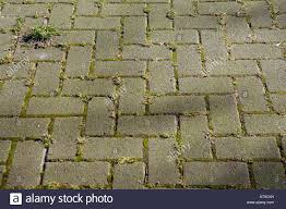 hardstanding floor paving outside weeds moss colour color