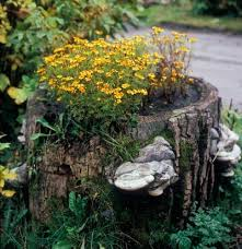How To Make Planters by Making A Hollow Stump Planter Tips For Creating Planters From Stumps