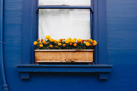What To Plant In Window Flower Boxes - 18 fun gardening ideas for your window boxes window box flowers