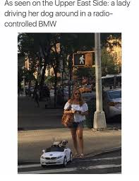 Dog Lady Meme - as seen on the upper east side a lady driving her dog around in a
