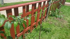 how to espalier fruit trees stark bro u0027s