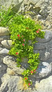 concept flowering succulents ideas 7092