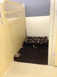 100 dog daycare floor plans brandywine apartments