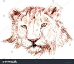 colored pencil sketch lion stock illustration 31836682 shutterstock