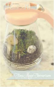 diy tiny terrarium all things heart and home