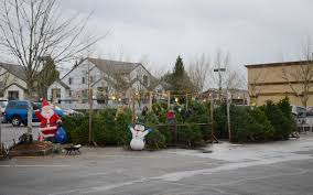 christmas tree for sale file christmas trees for sale in grocery store parking lot