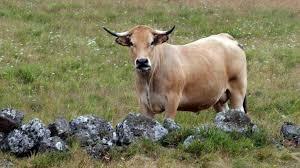bruitage cuisine creuse la cloche de sa vache fait trop de bruit il passe au tribunal