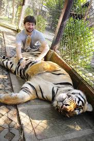 398 best a2 8 tigers images on big cats