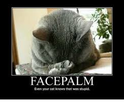 Stupid Cat Meme - facepalm even your cat knows that was stupid meme on me me