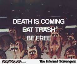 Racoon Meme - death is coming funny raccoon meme pmslweb